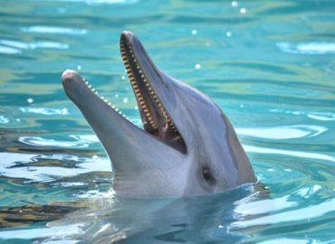 Делфинотерапия – красиви и щастливи с помощта на делфините