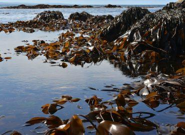 Козметика от водите на Скандинавия